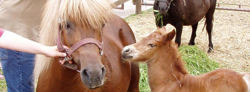 Streichelzoo und Tierpflege